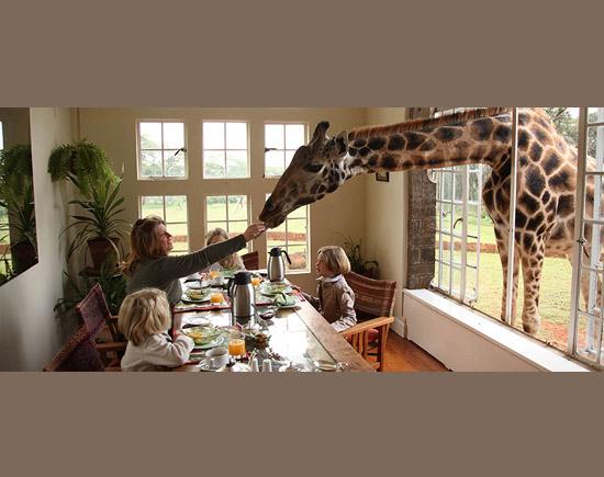 Pets bizarros - Girafa
