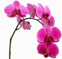 φυτά που παράγουν οξυγόνο τη νύχτα