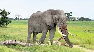 معنى الهروب من الفيل في الحلم