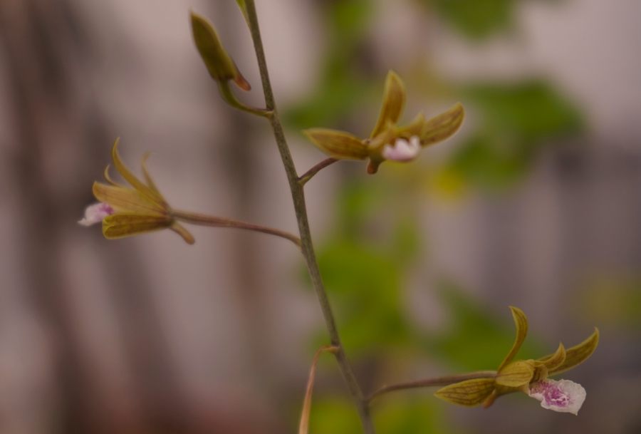 The miniature wild orchids mom found in the garden planted by Mama nature.