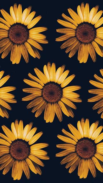 iphone aesthetic sunflower wallpaper