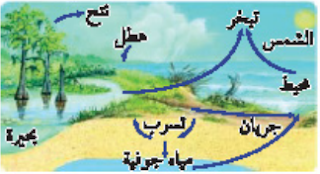 دورة الماء