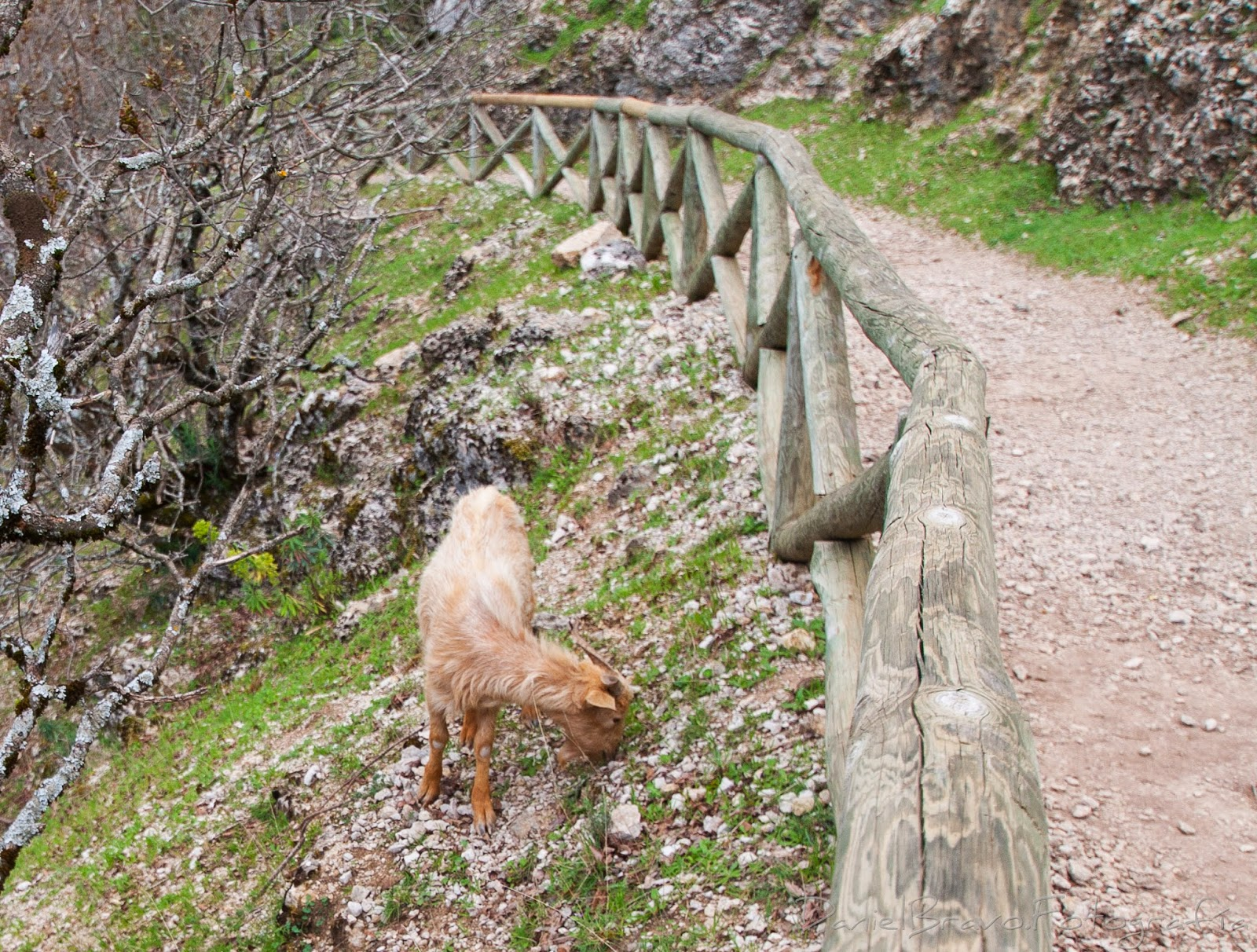 Cazorla, Sierra de Cazorla, rutas, senderos, Cerrada del Utrero