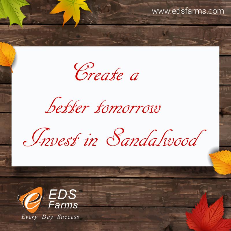 Sandalwood Farms: Commercial Uses of Sandalwood: