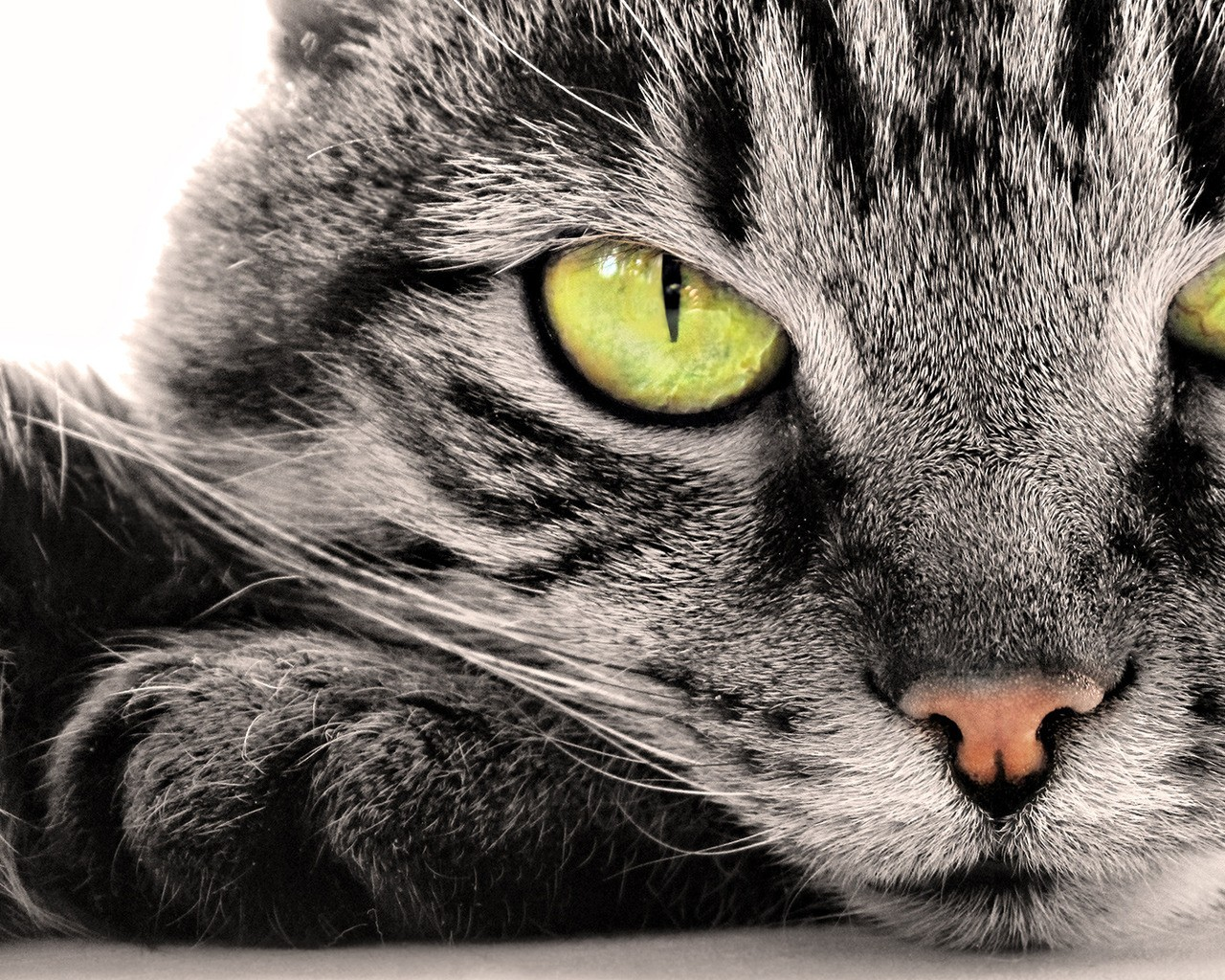 https://1.bp.blogspot.com/-c-tepJMHeBM/TlRNQ9DI1TI/AAAAAAAAAMk/dGa6Lhbaxm0/s1600/wallpaper-921744_cats-funny-sweets.jpg