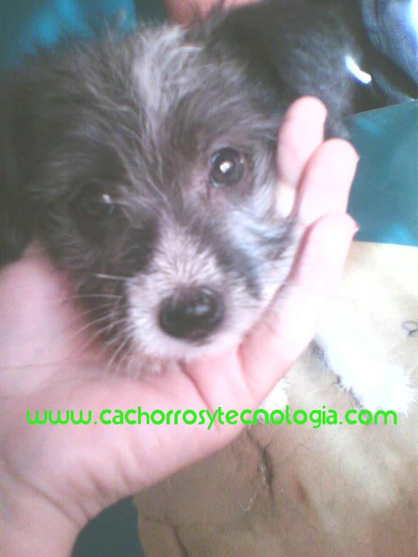 Esquizofrenia en perros dog mente perro puppy cachorros y tecnologia shurkonrad 1