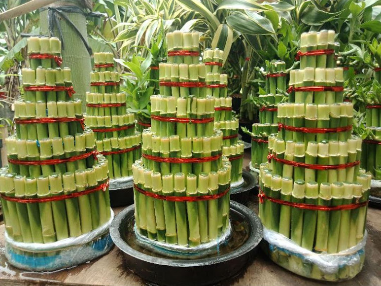 Bambu Hoki 5 susun pagoda susun 5 Tegal