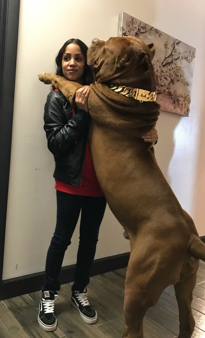 SEE This Madly HUGE Dog