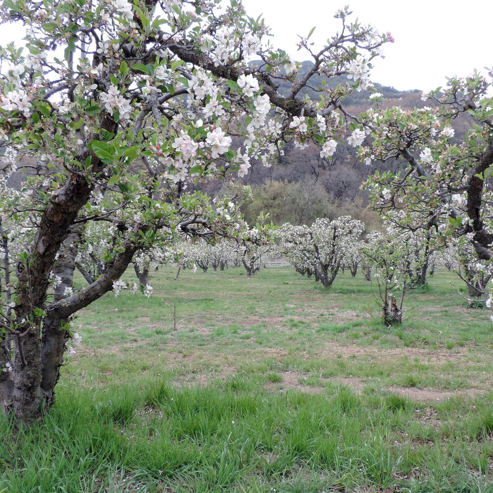 Eden By The Bay Southern California Montane Botanical Garden