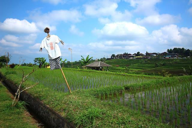 Épouvantail dans les rizières