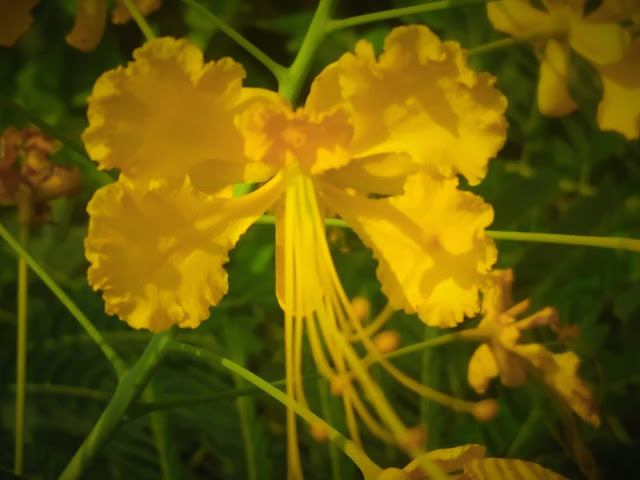 Yellow Flower Photography | From'S Photography