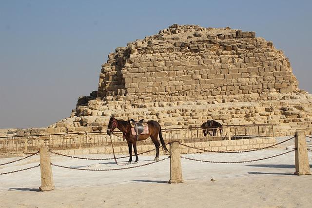 الخيول المصرية - معلومة