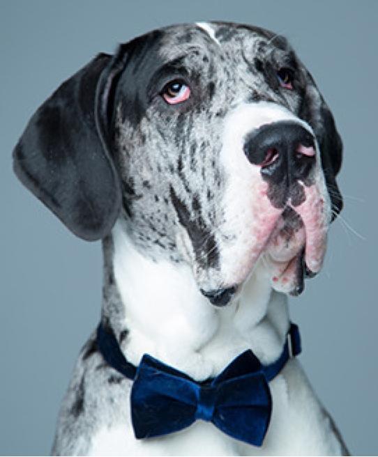 Backyard Burial Company: DOG FORMAL