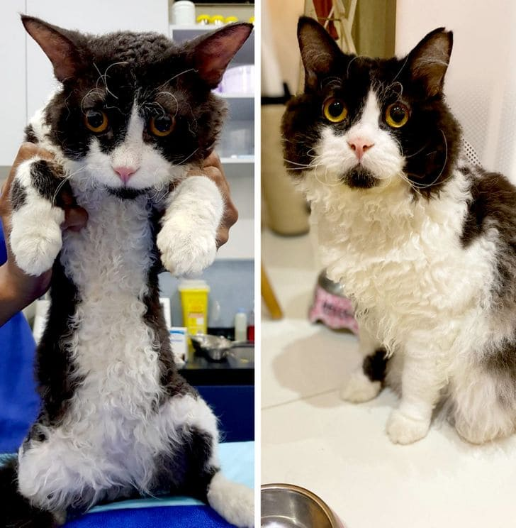 cats Who rock the world with their unique looks