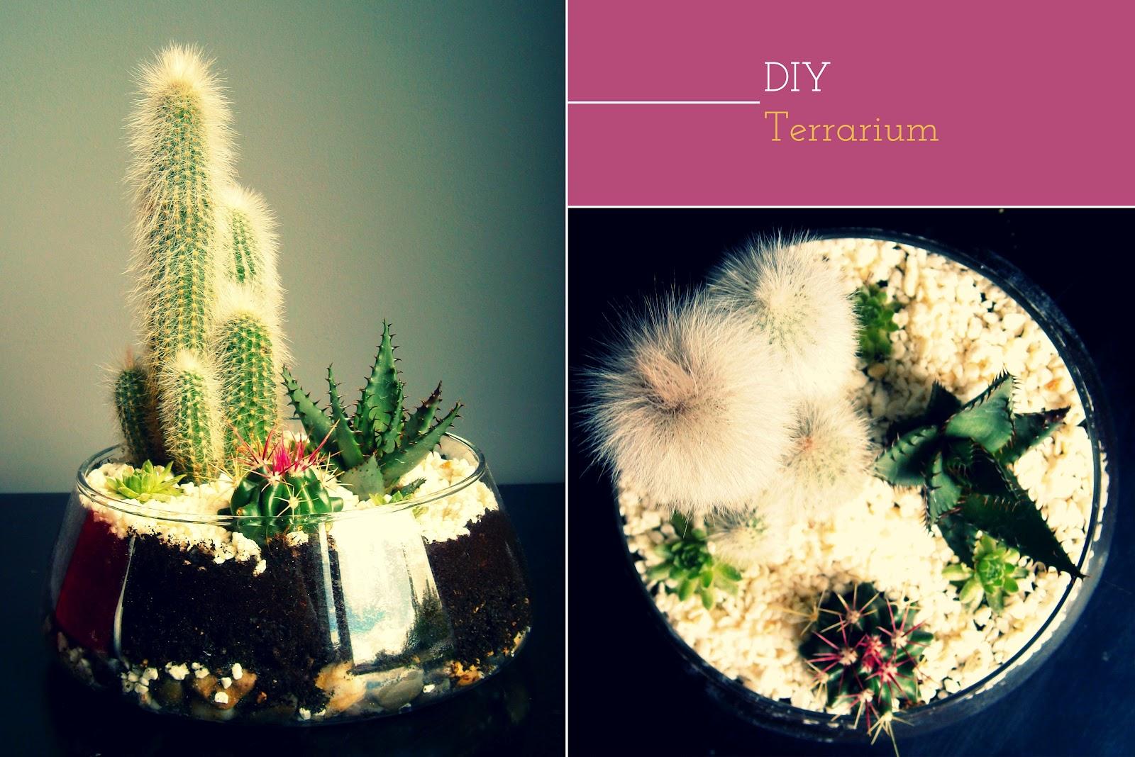 Sugar And Dinosaurs Diy 3 Un Terrarium De Cactus