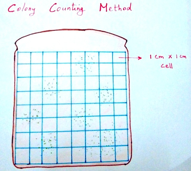 Colony Counting Experiment for Science Fair Projects for 8th Grade3
