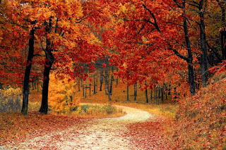 4K hd nature images beautiful hd wallpaper for mobile phones free download