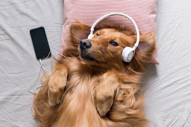 Você sabia que música também desestressa seu PET?