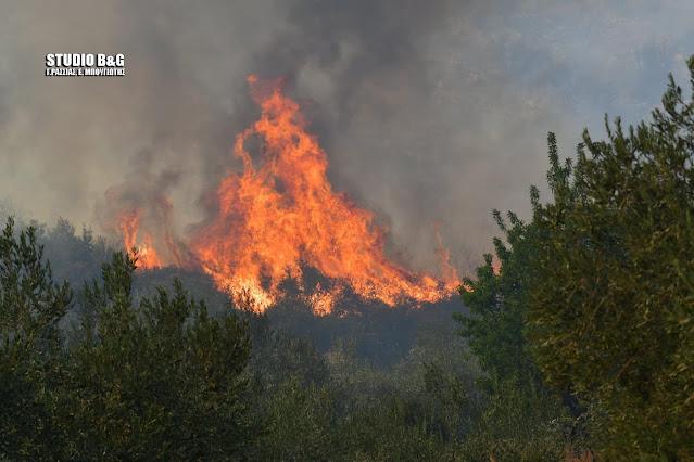 Ανακοίνωση του ΚΚΕ Αργολίδας για τις πυρκαγιές στο Δήμο Επιδαύρου
