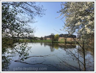 Kirschblütenzeit am Fischweiher