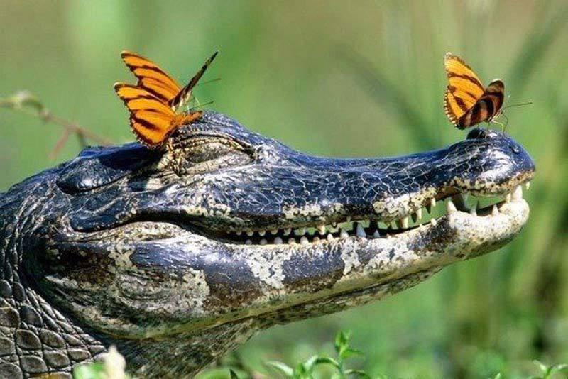increibles-fotos-alrededor-planeta-mundo-imagenes-animales-personas__016.jpg