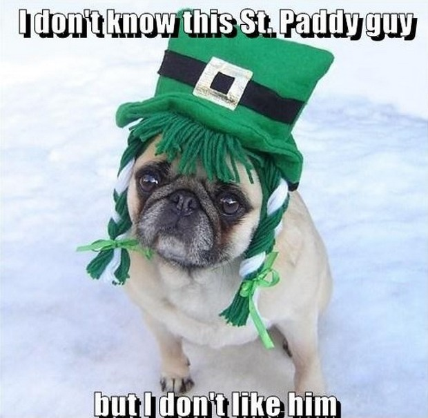 St Patrick's Day 2017 Funny