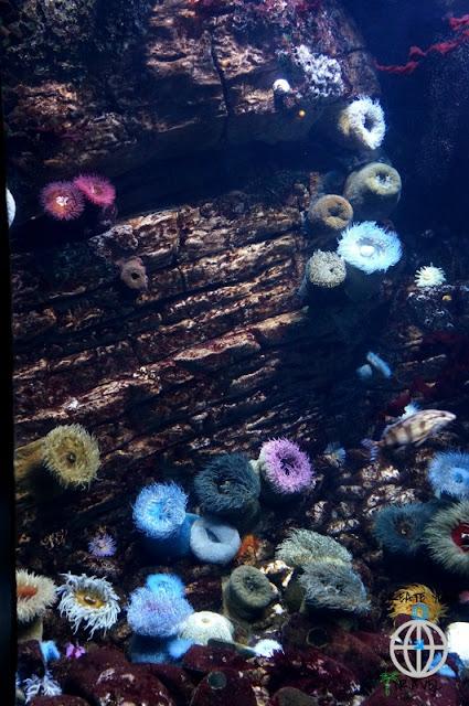 RAFY OCEANARIUM