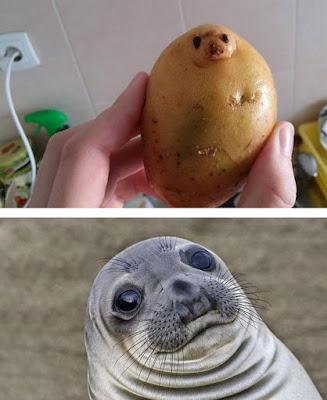 Parecido foca y papa