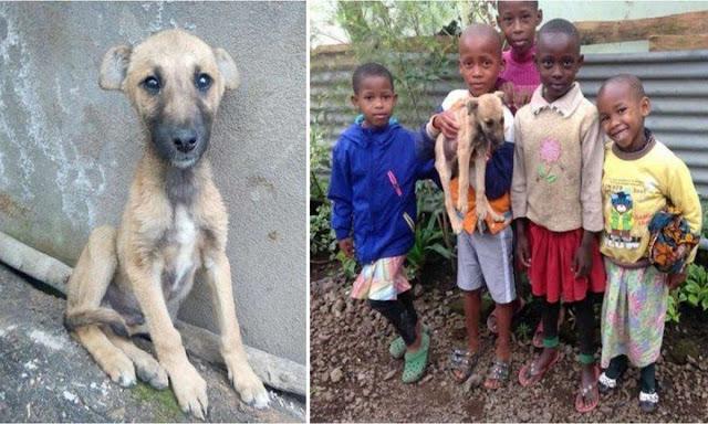 «Выбросьте его на улицу!» — сказали родители, но дети не могли предать щенка