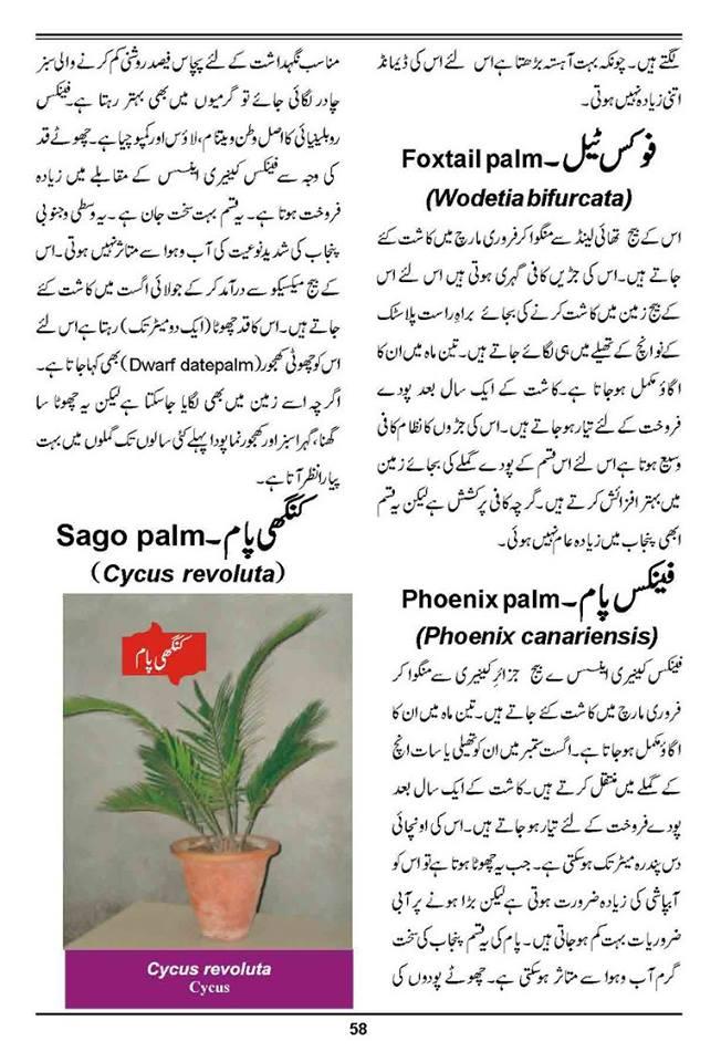 How to grow outdoor indoor plants flowers urdu guide for Gardening tools names in urdu