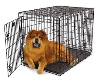 Dog, crate