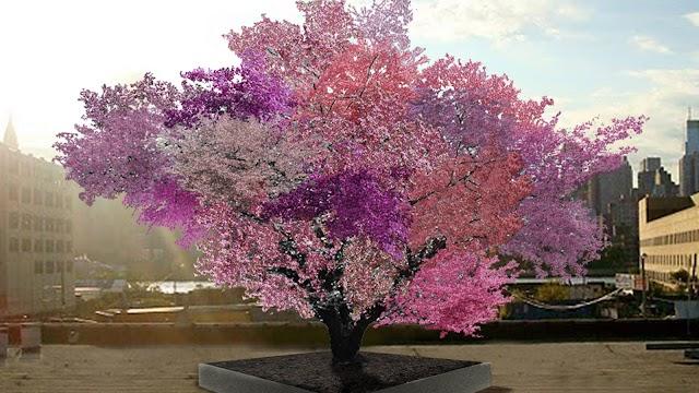 Frankenstein: el árbol que produce más de 40 tipos de frutas