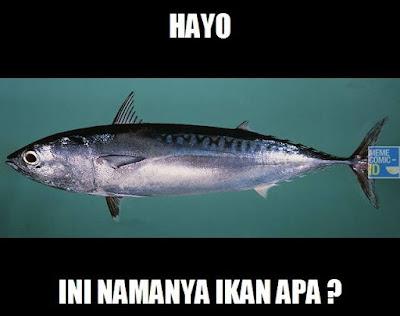 8 Meme Kocak 'Anak SD Salah Nyebut Ikan Tongkol' Ini Bikin Super Greget