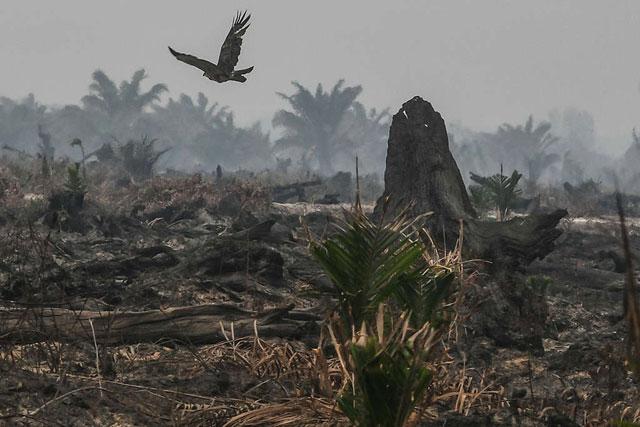 Kebakaran Hutan Ternyata Memiliki Manfaat Bagi Lingkungan