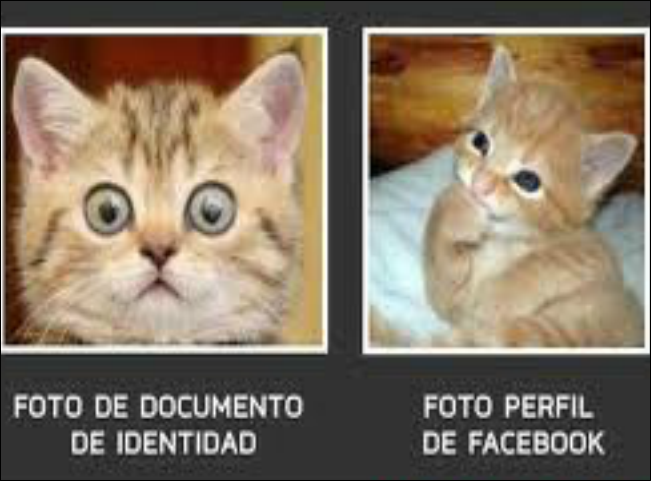 Imagenes De Animales Con Frases Chistosos Imagui