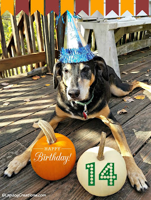 dog birthday pumpkins rescue senior