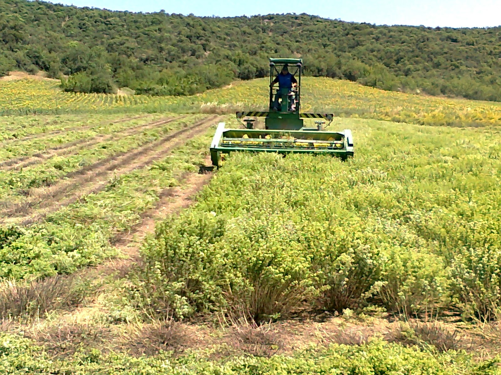 Αγροσελίδα  Ξεκινά επιδότηση για αγροτική παραγωγή 75% 265dad6f7e1