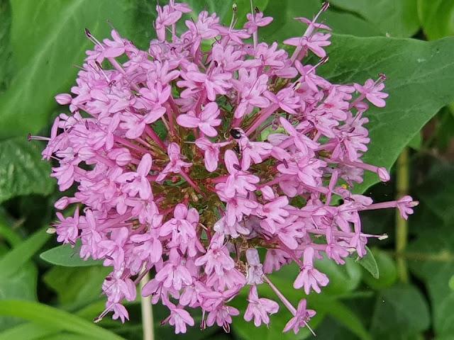 pink-blooms-samsung-s10