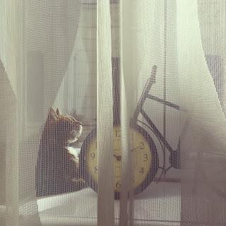 mallory update cats wanderlust budapest hungary sunshine naps