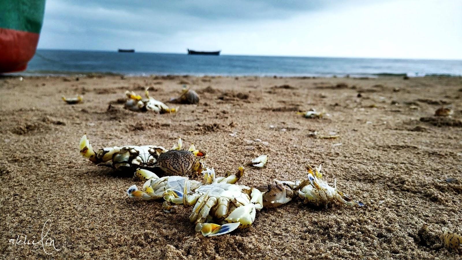 crabs at beach