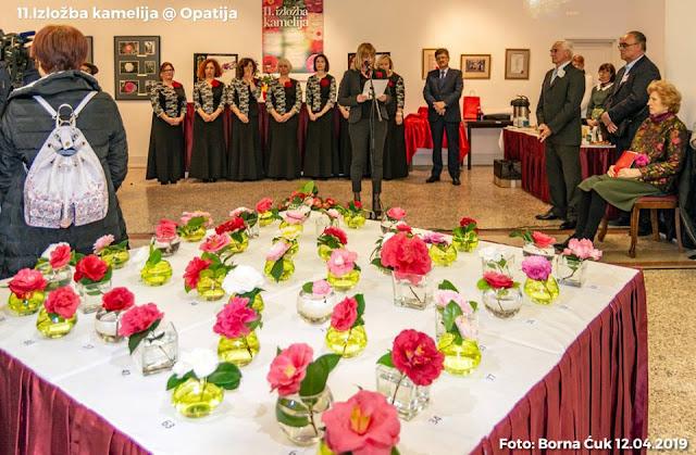 Opatija: 11. izložba kamelija u paviljonu Juraj Šporer