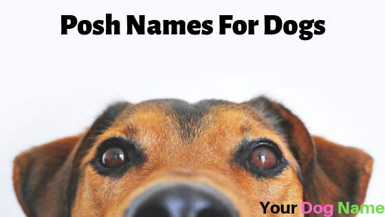 Posh Names For Dogs