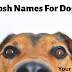 Posh Names For Dogs | Best Posh Dog Names