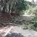 Chuva forte derruba árvores e causa estragos