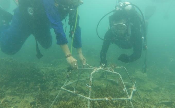 Peduli Ekosistem Laut, Kapolres Pandeglang Lakukan Trnaspalansi Terumbu Karang di Perairan Pulau Liwungan