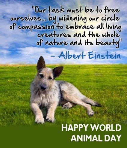 World Animal Day Wishes for Instagram