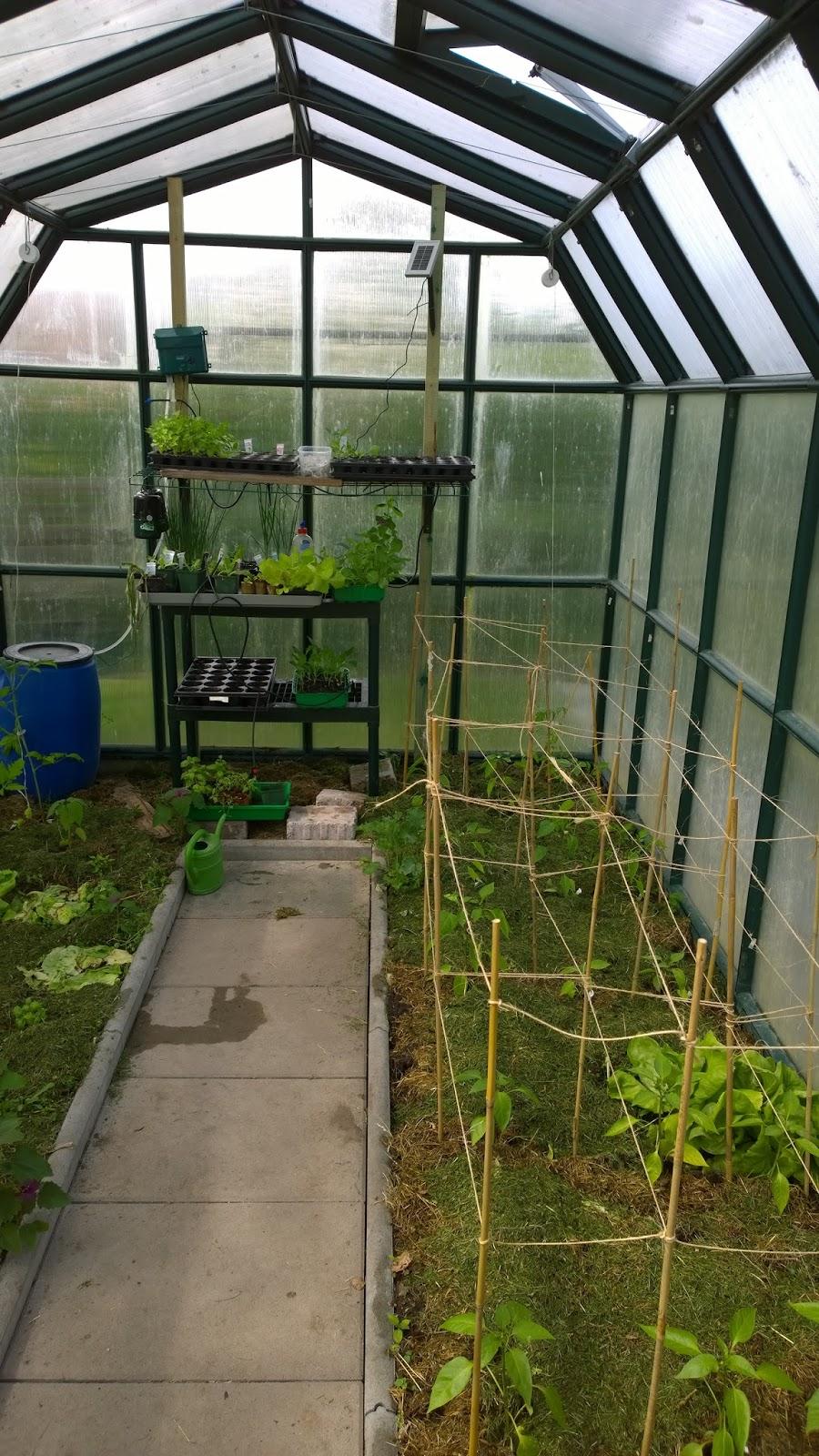 achimsgarten der selbstversorger und garten blog tomaten und paprika sind gepflanzt ein. Black Bedroom Furniture Sets. Home Design Ideas