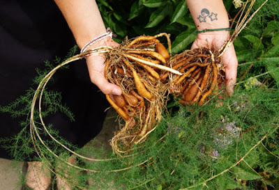 Tanaman Herbal ini bisa Picu untuk Cepat Hamil