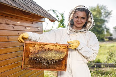První krůčky k vlastnímu chovu včel