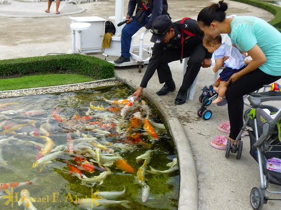 Feeding the fishies in Wat Rong Khun, Chiang Rai, North Thailand